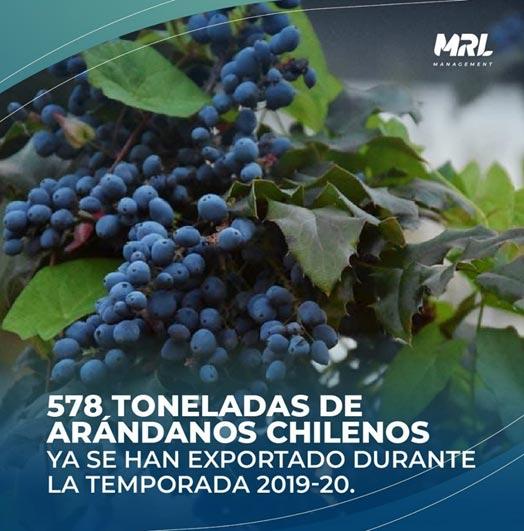 temporada de arandanos en Chile